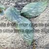 Homenagem a Rosalia de Castro, por Alfredo Ferreiro e Tono Galán