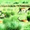 <em>O cervo do monte</em>, por Iolanda Aldrei e Xavier Ponte Casas