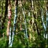 Bosque, por Nando Lestón