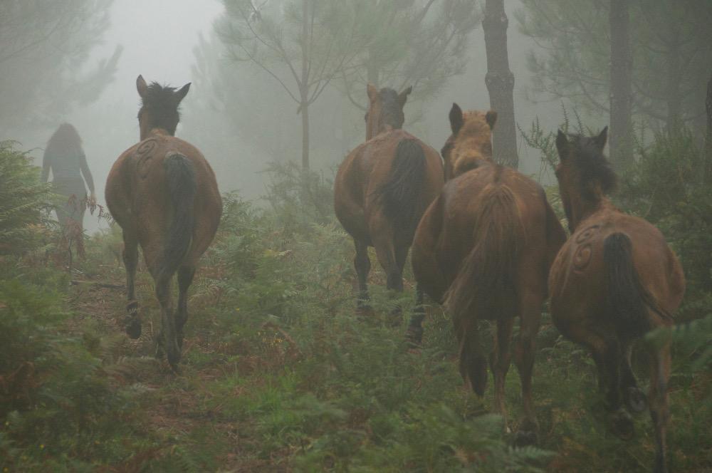 Manuel Lestón Cabalos na néboa 1